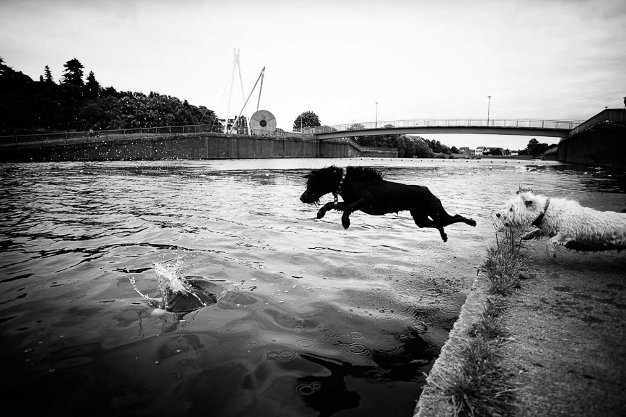 Dog photography, Exeter, Devon, Cornwall, Dorset, Uk