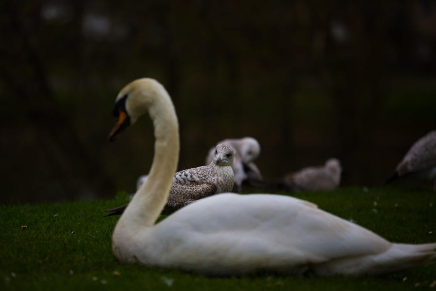 Gull, bird, seagull photographer, devon