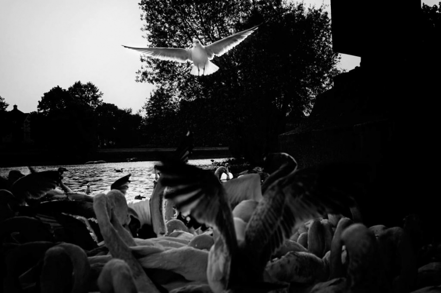 seagull_light