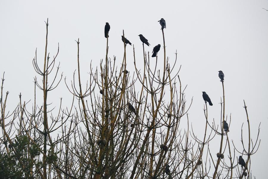 Bird photography, Exeter, Devon, Cornwall, Uk